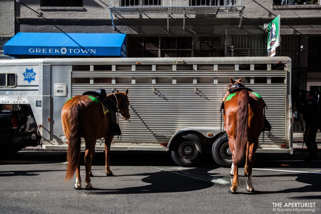 Two San Francisco Police horses on 2nd Street await the start of the 168th annual San Francisco St. Patrick's Day Parade on Saturday, March 16, 2019, in San Francisco, Calif. (Photo by Ekevara Kitpowsong/Current SF)