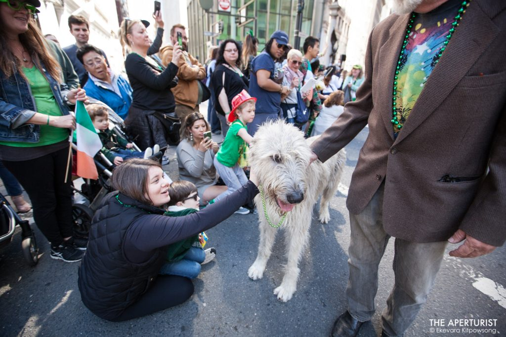 Parade watchers pet an Irish Wolfhound dog during the 168th annual San Francisco St. Patrick's Day Parade on Saturday, March 16, 2019, in San Francisco, Calif. (Photo by Ekevara Kitpowsong/Current SF)